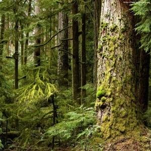 продам лес кругляк пиловочное бревно хвойных пород