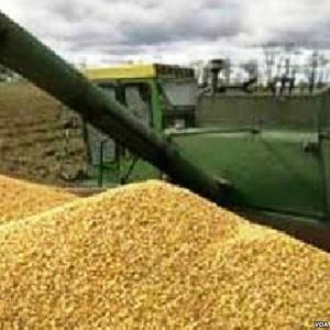 Организация продает зерно (продовольственное,  фуражное)