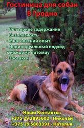 Гостиница для собак в Гродно